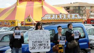 """Ativista com cartaz: """"Como na Inglaterra, Holanda, Bélgica, proíbam animais em circos"""", em frente à entrada do circo Pinder em Toulouse, sudoeste da França."""