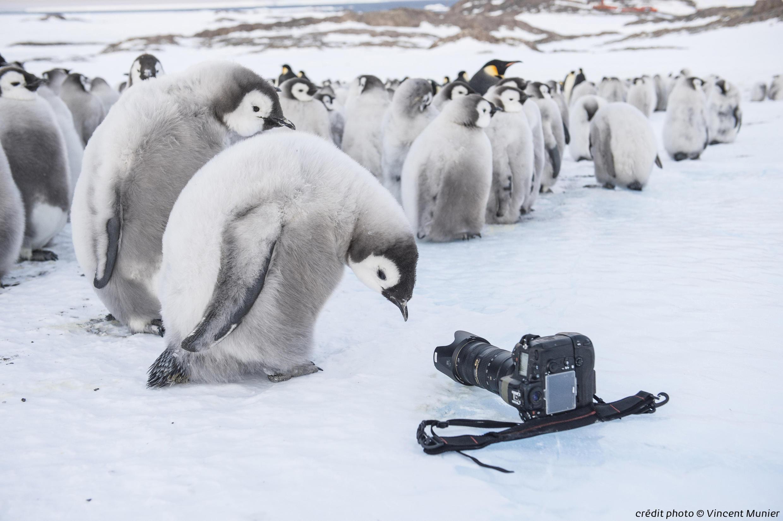 A exposição Antarctica no Museu des Confluences, Lyon vai até dia 31 de dezembro.