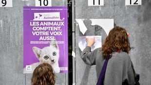 Партия в защиту животных набрала на выборах в Европарламент число голосов, сопоставимое с некоторыми традиционными партиями