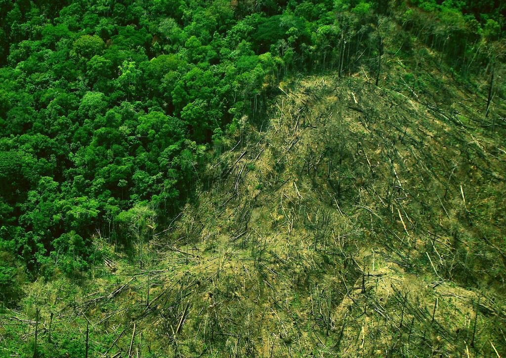 2012 havia sido o ano com menor desmatamento na Amazônia.