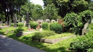 Rangées de tombes dans le cimetière principal de Vienne, en Autriche.