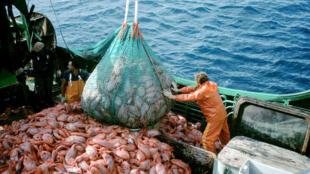 La sobrepesca es una de las razones de la disminución de los vertebrados marinos.