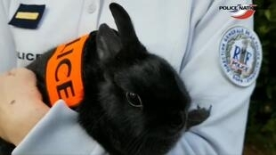A police officer holds a rabbit as part of an April Fools Day prank to recruit rabbits into French police force
