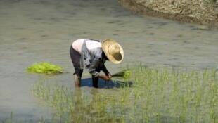 Un paysan philippin.