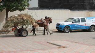 Chariot_à_cheval_à_Dakar