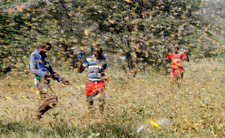 Wakaazi wa Samburu wanajaribu kufukuzana na kundi la nzige katika kijiji cha Lemasulani, Kaunti ya Samburu, Kenya, Januari 17, 2020.