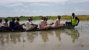 Wani yanki na gonakin shinkafar da ambaliya ta mamaye a jihar Borno.