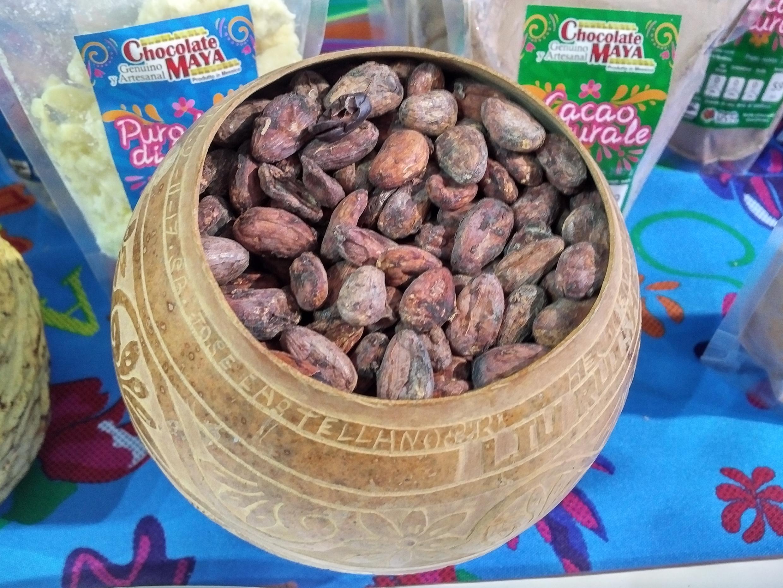 Cacao Chontalpa de Tabasco, México.