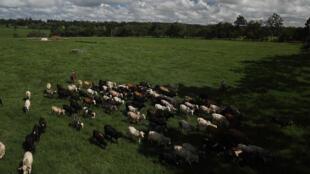 Criadores de gado