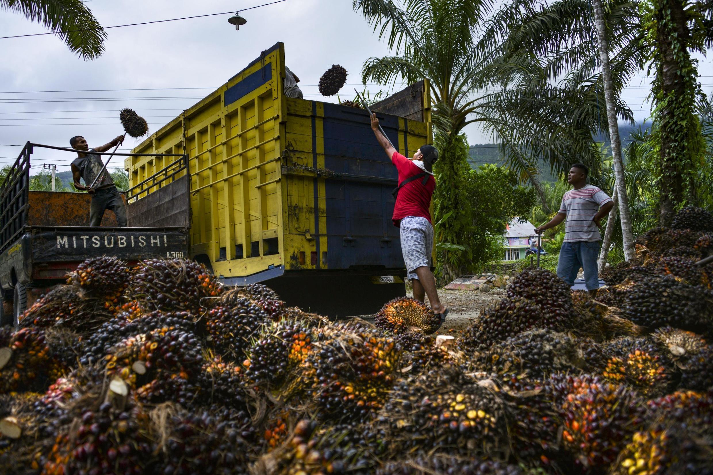L'Indonésie, premier producteur mondial d'huile de palme porte plainte contre l'Union européenne dénonçant une politique qu'elle juge «discriminatoire».
