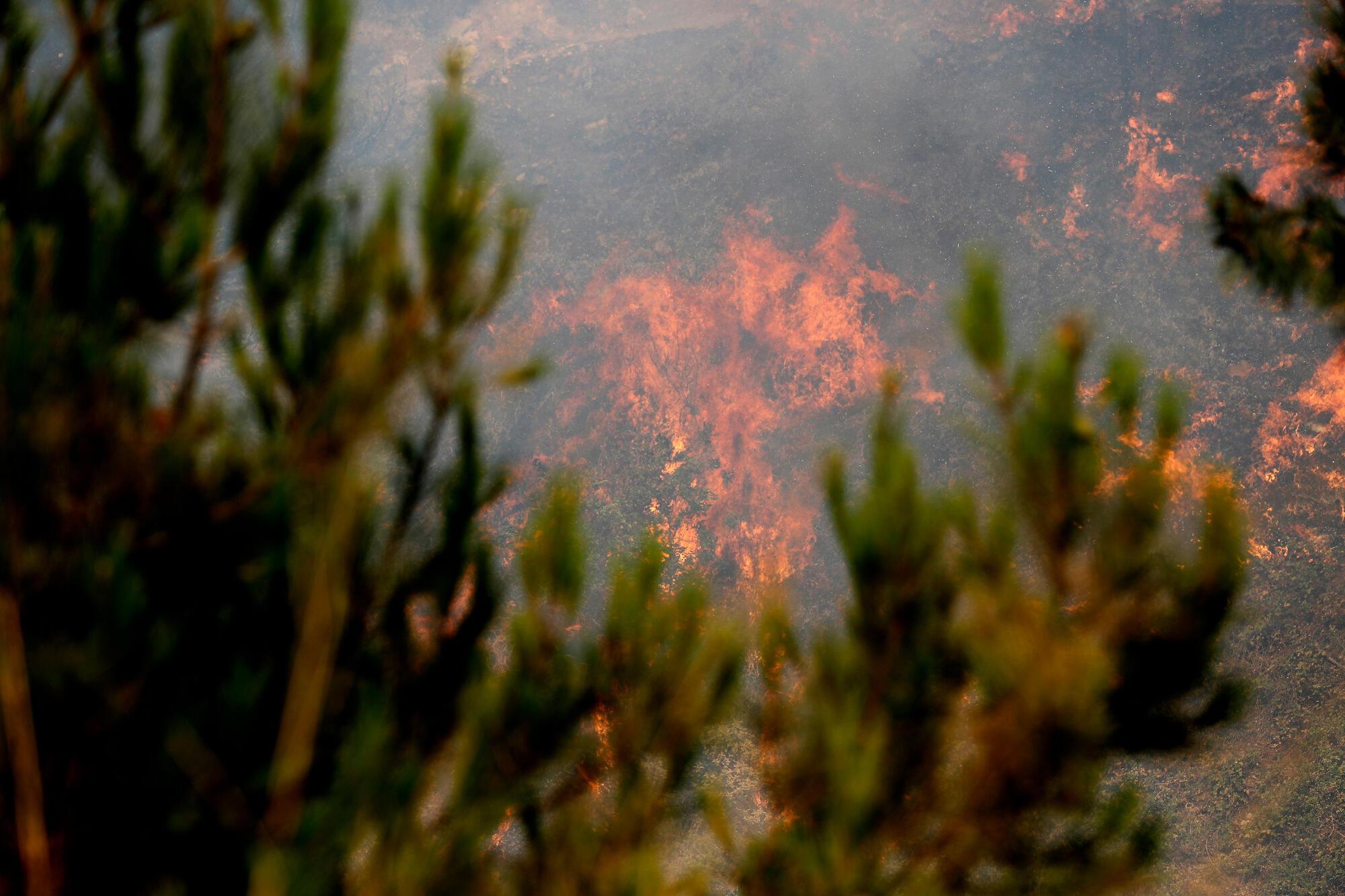 Liban - Lebanon - Feux incendie forêt