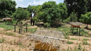 L'ancien chef du village d'Abreha we Atsbeha, dans son verger encore verdoyant à la fin de la saison sèche.