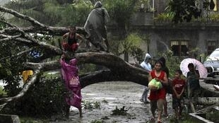 Habitantes de Tagum City intentan levantar un árbol caído tras el paso del tifón Bopha.