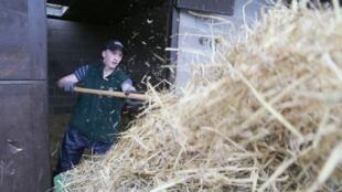 L'Irlande exporte environ 90—% de ce qu'elle produit (Photo d'illustration).