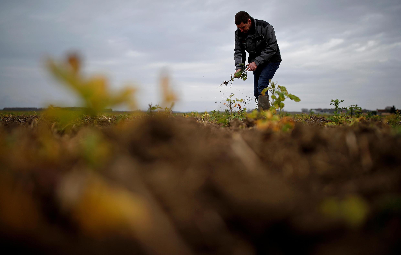 Agricultura França Agriculture France