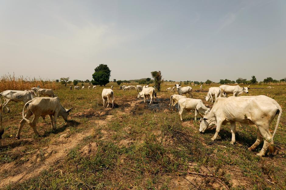 Wani filin kiwon dabbobi a Paiko da ke jihar Niger a Najeriya.