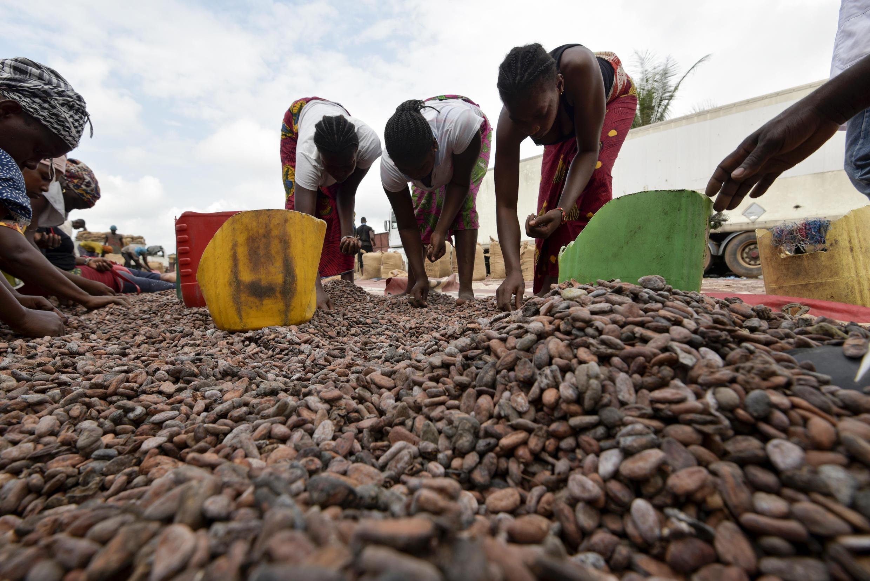 Image d'archive RFI: Des femmes récoltent des fèves de cacao à Abidjan, Côte d'Ivoire, le 3 juillet 2019