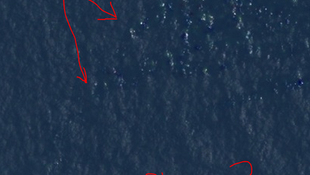 La chanteuse Courtney Love a tracé ses hypothèses concernant le vol MH370 sur une image sattelite...