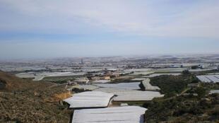 El Ejido (España): para los almerienses la agricultura es la tabla de salvación pues es el único rubro que no presenta un saldo negativo. Si las exportaciones salvan al sector, lo que está en crisis es el empleo, sobre todo el de los inmigrantes.