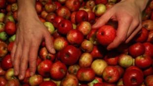 Uno de los productos bretones más famosos es su sidra. Una bebida fabricada con manzanas.
