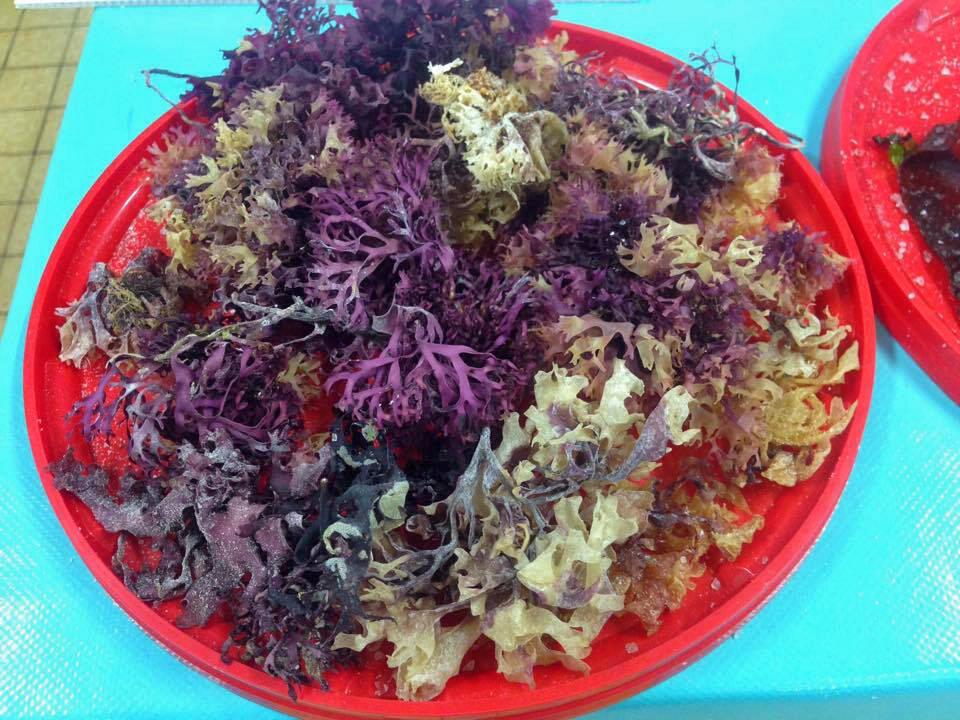 Une salade d'algues.
