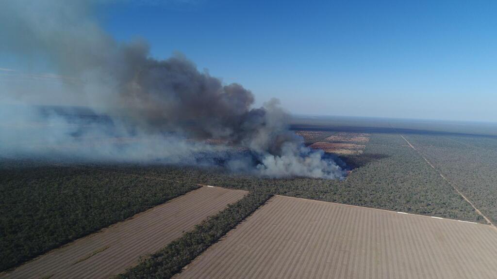 En El Chaco argentino, una parcela de bosque se esfuma para dejar paso al cultivo de soja.
