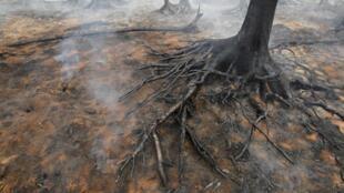 Тлеющие деревья в лесу блих г. Электрогорска (60 км к востоку от Москвы).