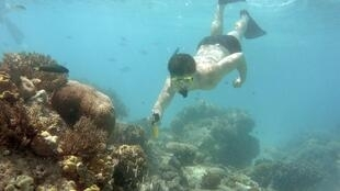 The reef has suffered three mass coral bleaching events in the past five years, by some measures losing half its corals since 1995 as ocean temperatures have climbed