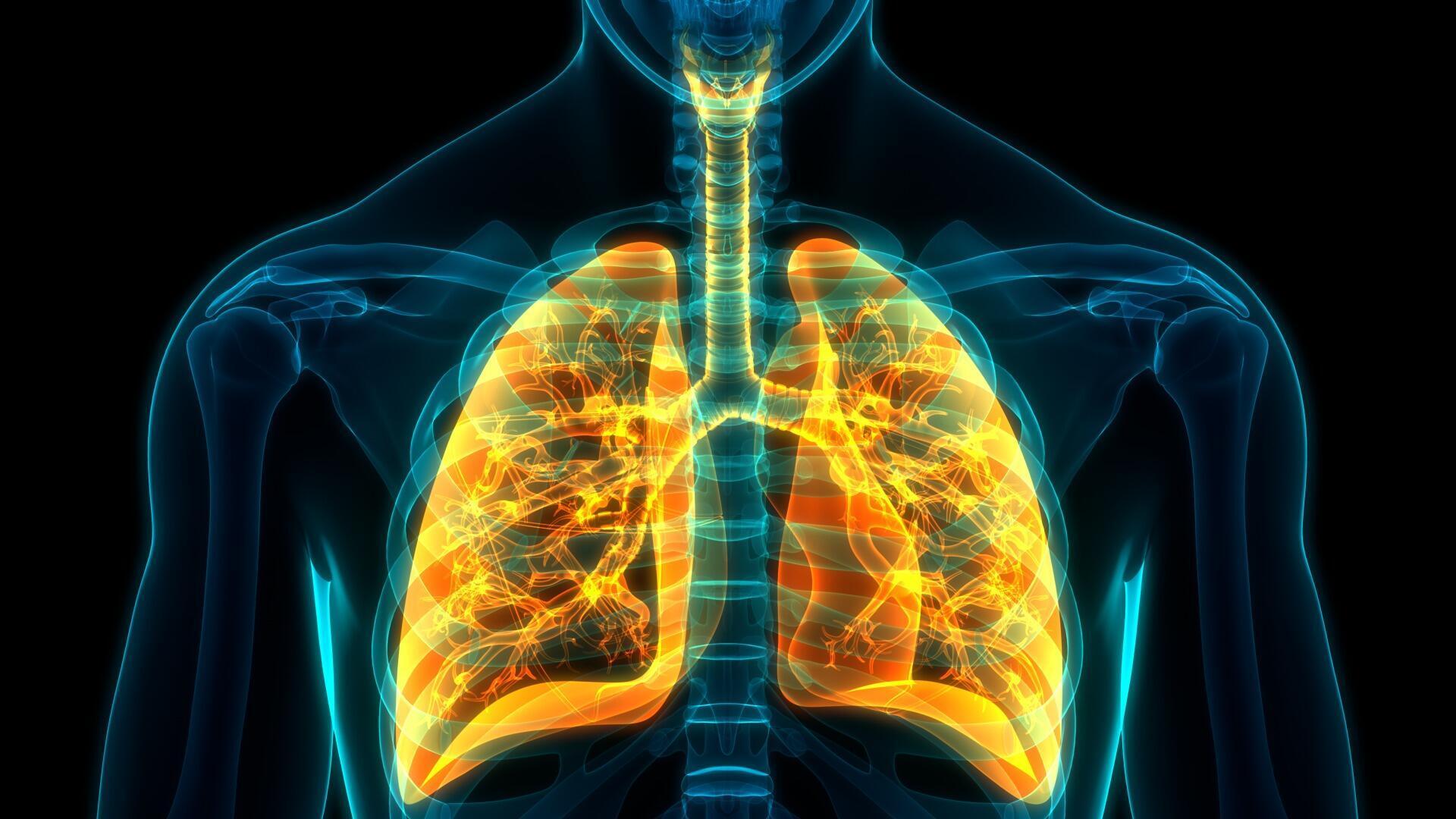 plèvre illustration poumons cage thoracique pneumothorax
