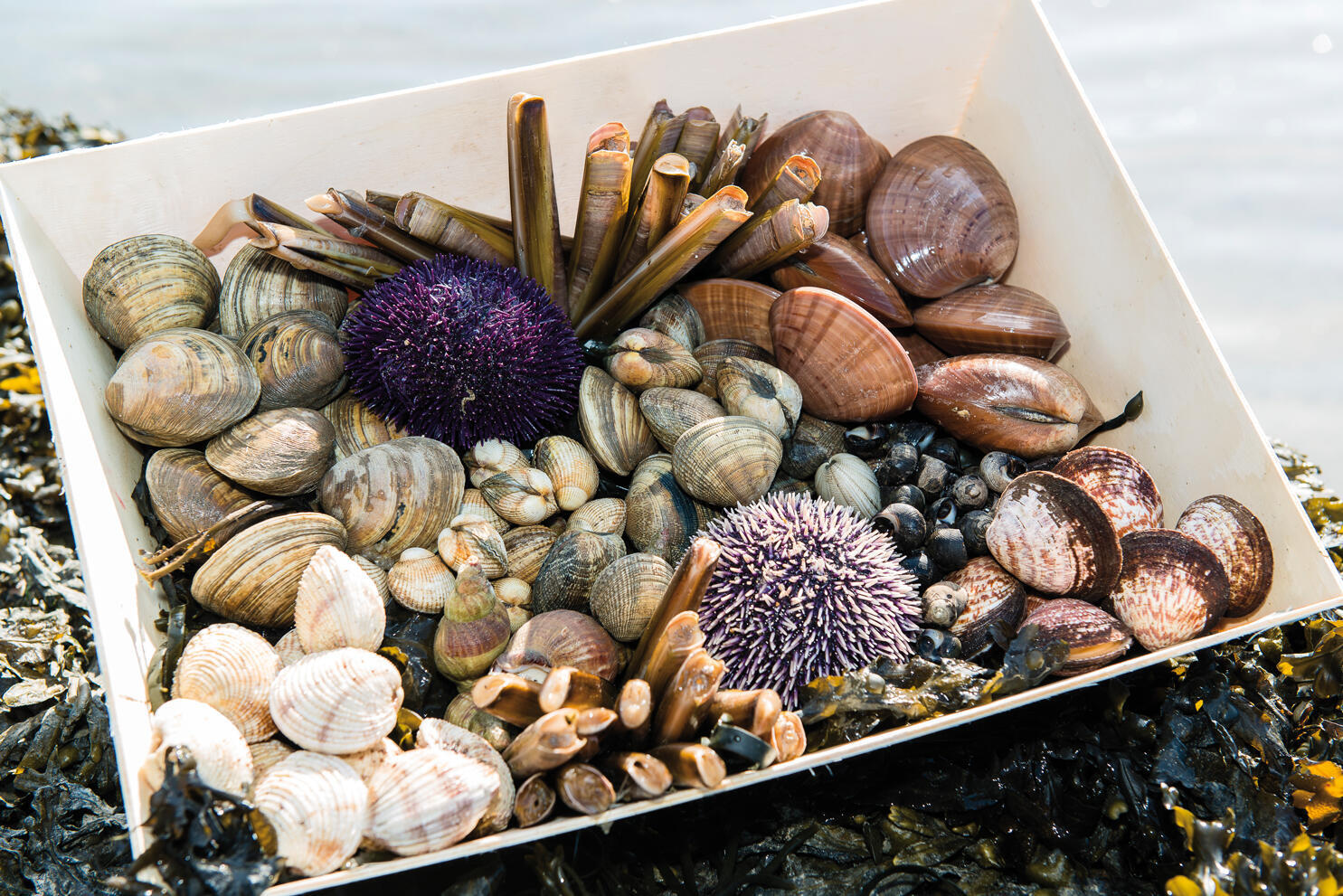 Crustáceos de la Maison Thaeron.