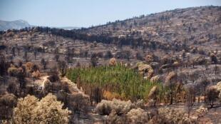 Imagen del gran incendio forestal de Andilla de 2012.
