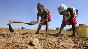 Des enfants sénégalais récoltent de l'arachide dans la région de Kaolack en 2007.