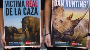 Des activistes de la cause animale brandissent des affiches devant l'hôpital où est soigné Juan Carlos, le 17 avril 2012.