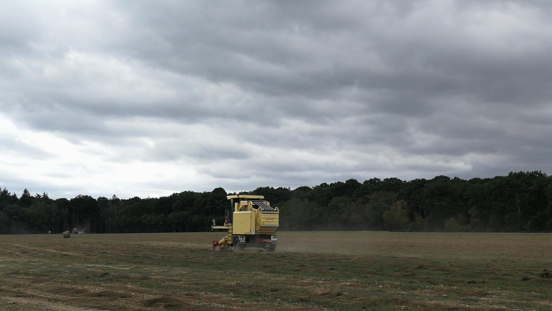 Récolte de lin dans un des champs de Jean-Charles Deschamps, président de la coopérative linière Natup qui porte le projet de la relocalisation d'une usine de filature en Normandie.