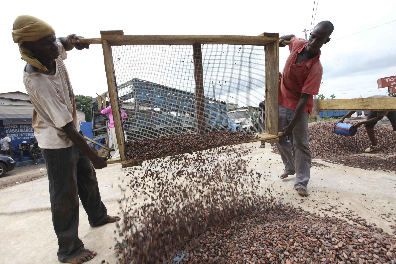 En Côte d'Ivoire, le secteur du cacao est l'un des piliers de l'économie.