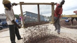 Pour peser dans les circuits économiques, les paysans ivoriens devront se fédérer en coopératives.