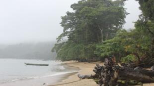 La forêt de Masoala, dans le nord-est du pays est la plus grande aire protégée du pays. Elle a été pillée pour son bois de rose.