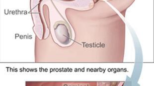 Prostate.