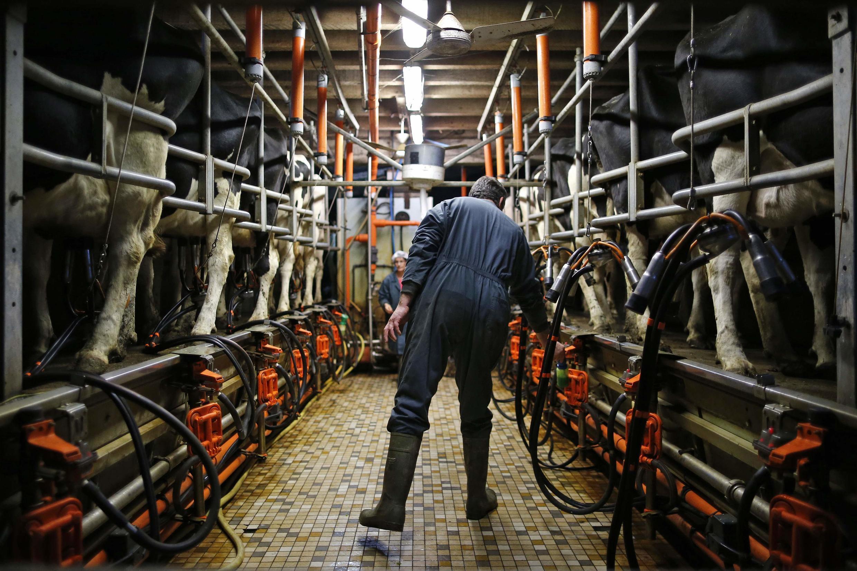 Un éleveur français dans son exploitation près de Nantes.