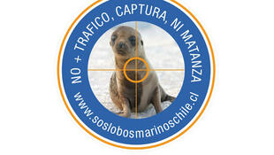 La campaña SOS Lobos Marinos Chile está a cargo de organizaciones ciudadanas chilenas vinculadas a la conservación de la biodiversidad marina, la participación ciudadana y el bienestar animal.