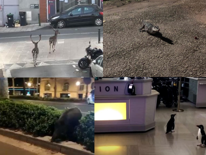 animais cidade