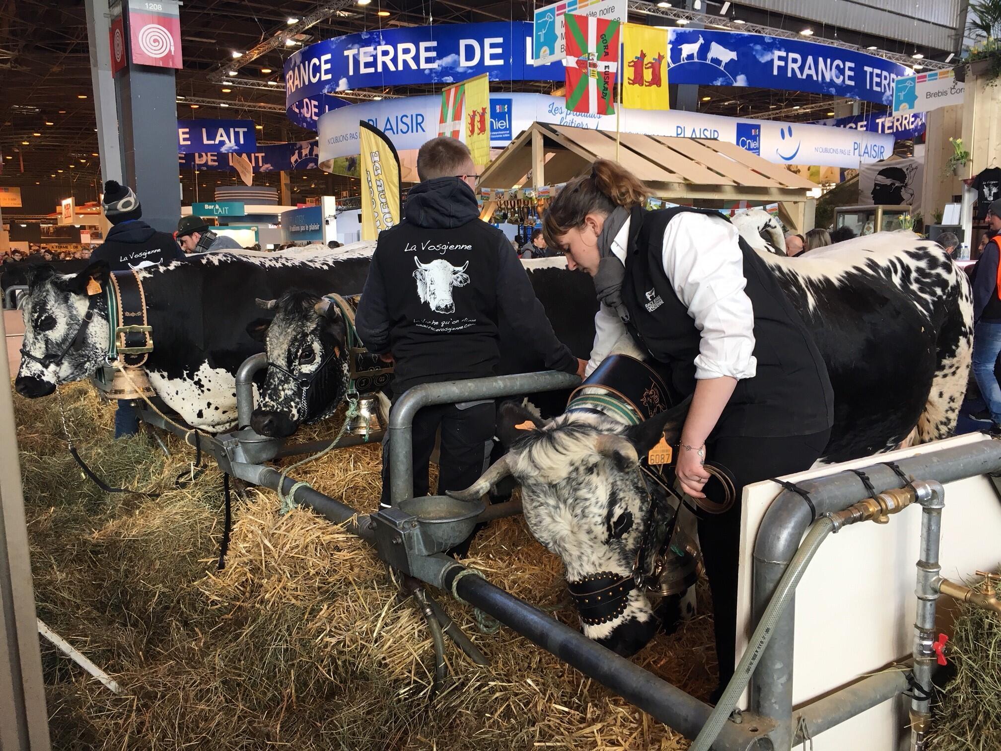 Acordo com o Mercosul pode liberar a entrada de até 100 mil toneladas de carne bovina sul-americana sem barreiras alfandegárias no bloco europeu.