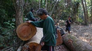 Indígenas caiapós inspecionam toras de árvores abandonadas por madeireiros que fugiram de uma patrulha na terra indígena Baú, no Pará.