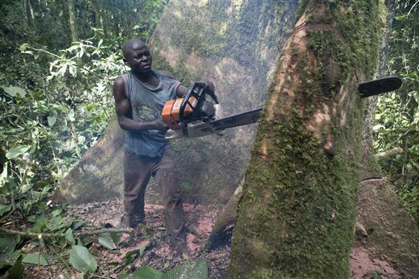 A desflorestação em África é um problema ambiental de primeiro plano