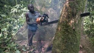 Depuis la mi-juin en RDC, le bois qui n'est pas transformé est bloqué au port fluvial de Matadi.