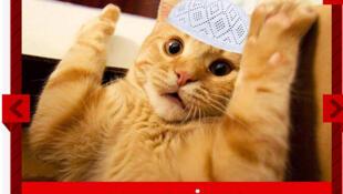 «C'est pas moi», proteste ce chat. Des félins accusés par un ministre d'avoir provoqué les coupures d'électricité pendant un vote électronique.  Un exemple de «caps», images détournées et inspirées de l'actualité politique.
