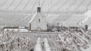 Snow-covered vines in the eastern region of Alsace