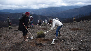 Des volontaires participent aux opérations de reboisement dans la Serra do Açor, près d'Arganil dans le massif central Portugais.