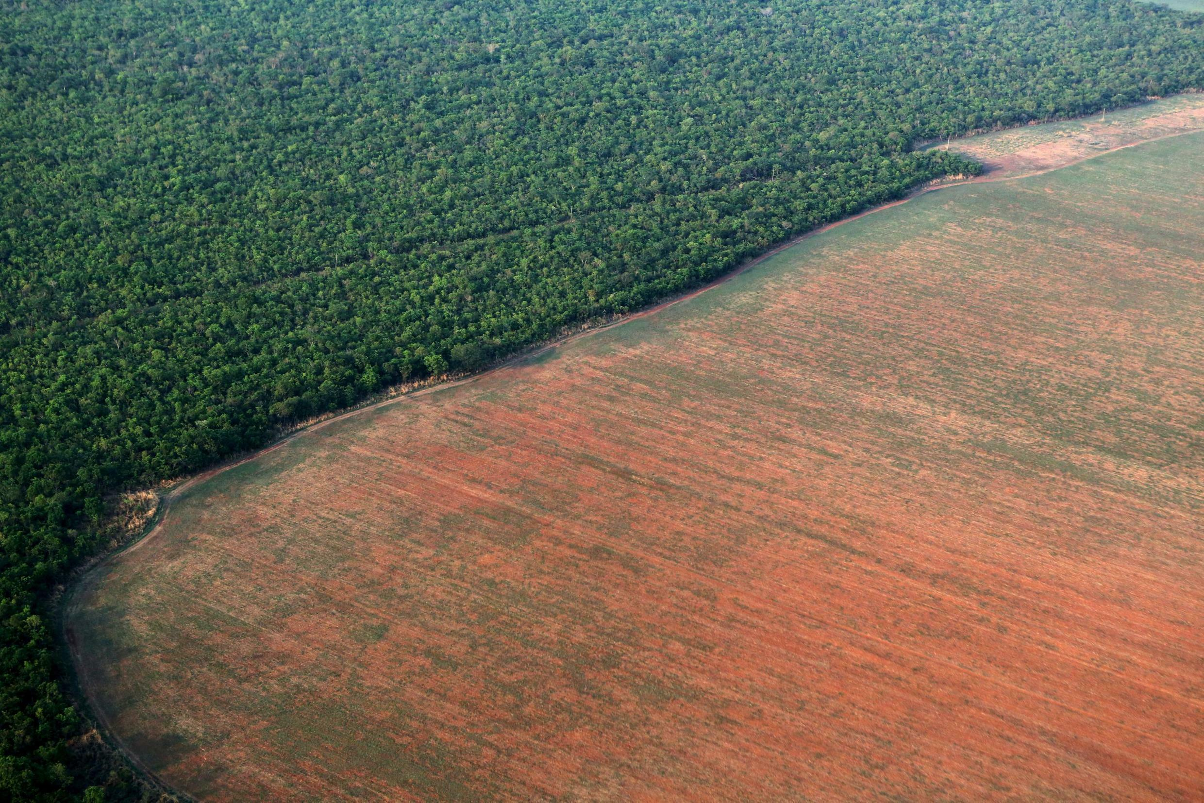 Parts of the Amazon forest cleared for soybean cultivation in the western state of Mato Grosso, Brazil.