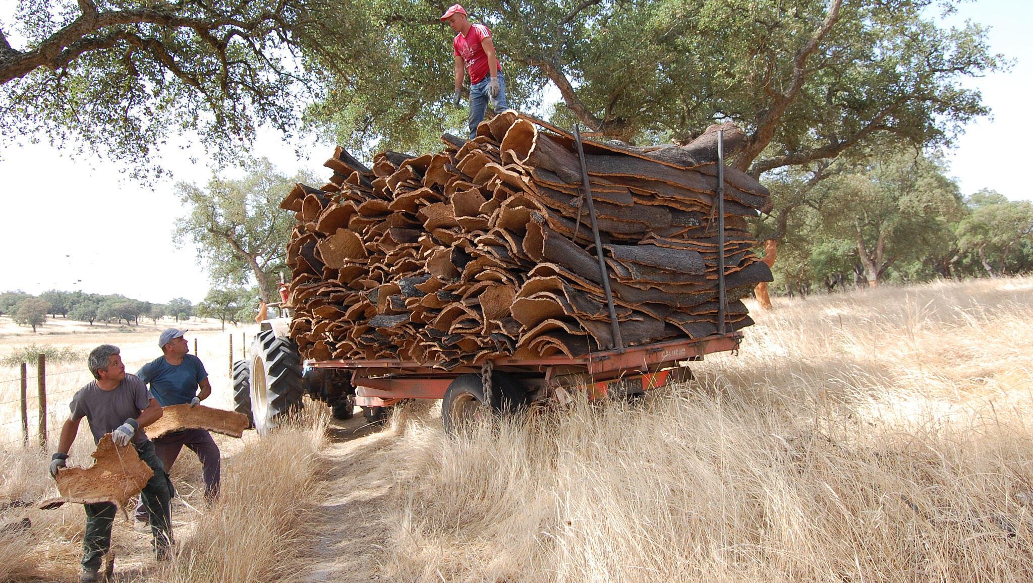 Les faiseurs de tas de liège et leur tracteur.